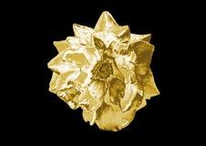 Rose de oro Imagen de archivo