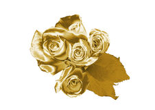 Rose de oro Fotos de archivo libres de regalías