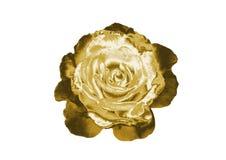 Rose de oro Imagen de archivo libre de regalías