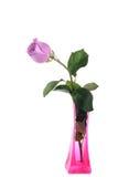 Rose de pourpre dans le vase Photos stock