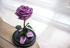 Rose de pourpre dans un flacon en verre Photo stock
