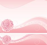 Rose de rose Photos stock