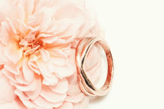 Rose de rose avec l'anneau Photos stock