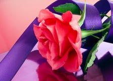 Rose de rose avec le ruban pourpre Photographie stock libre de droits