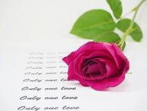 Rose de rose avec le texte sur le fond blanc Photographie stock libre de droits