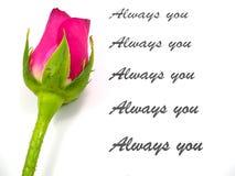 Rose de rose avec le texte sur le fond blanc Photographie stock