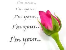Rose de rose avec le texte sur le fond blanc Image stock