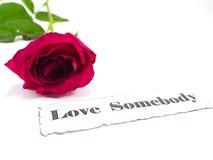 Rose de rose avec le texte sur le fond blanc Image libre de droits