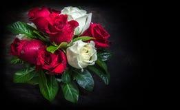 Rose de rose et de blanc avec de diverses feuilles Photographie stock libre de droits