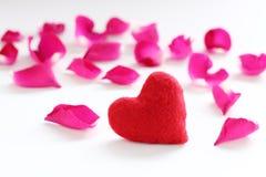 Rose de rose pour le festival d'amour Images libres de droits