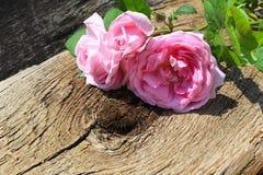 Rose de rose sauvage sur le fond en bois Photo libre de droits