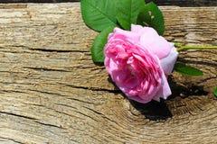 Rose de rose sauvage sur le fond en bois Photo stock