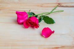 Rose de rose sur le fond en bois Images libres de droits