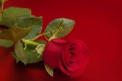 Rose de rouge Images stock