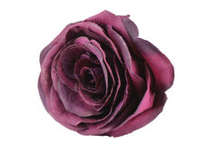 Rose de rouge Photographie stock