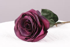 Rose de rouge Photos stock
