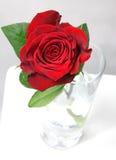 Rose de rouge Images libres de droits