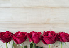 Rose 17 de rouge Photographie stock libre de droits