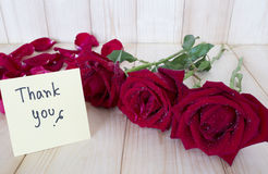 Rose 70 de rouge Photos stock