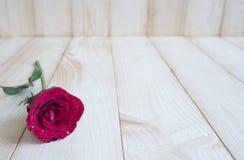 Rose 84 de rouge Image libre de droits