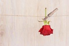 Rose de rouge accrochée sur la corde Images libres de droits