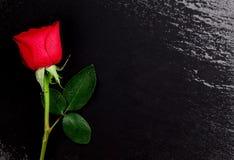 Rose de rouge au-dessus de pierre noire Photo libre de droits