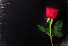 Rose de rouge au-dessus de pierre noire Photographie stock libre de droits