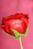 Rose de rouge avec je t'aime estampée là-dessus Photo stock