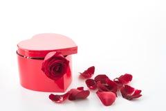 Rose de rouge avec la boîte rouge de coeur Photo stock