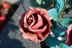 Rose de rouge avec les feuilles bleues Photo stock