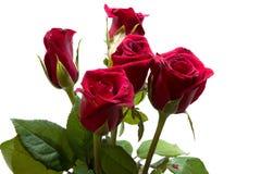 Rose de rouge d'isolement par plan rapproché sur les milieux blancs Image stock