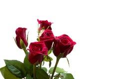 Rose de rouge d'isolement par plan rapproché sur les milieux blancs Images stock
