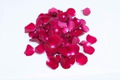 Rose de rouge d'isolement par plan rapproché sur les milieux blancs Photographie stock libre de droits