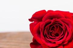 Rose de rouge dans le coin avec la pièce pour le texte Image libre de droits