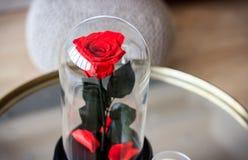 Rose de rouge dans un flacon Durable s'est levé photo libre de droits