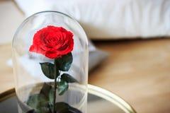Rose de rouge dans un flacon Durable s'est levé photographie stock libre de droits