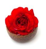 Rose de rouge dans une cuvette en bois Image libre de droits