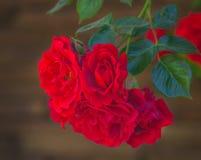 Rose de rouge dans une fin de jardin  Photo libre de droits