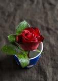 Rose de rouge dans une tasse en céramique bleue sur une surface foncée Photo libre de droits
