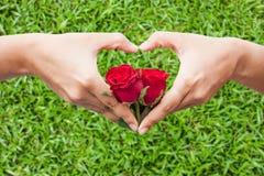 rose de rouge de prise de main Photographie stock libre de droits