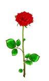 Rose de rouge de tige et feuilles sur un fond blanc Illus de vecteur Photographie stock libre de droits
