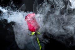Rose de rouge en nuages de fumée Photographie stock libre de droits