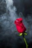 Rose de rouge en nuages de fumée Photos stock