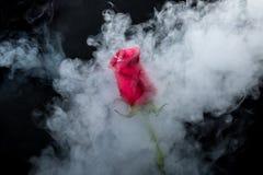 Rose de rouge en nuages de fumée Photo stock