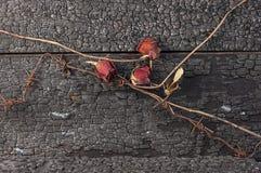 Rose de rouge et barbelé trois rouillé Photos libres de droits
