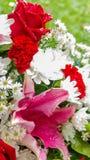 Rose de rouge et fleurs blanches dans le bouquet Image stock