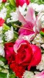 Rose de rouge et fleurs blanches dans le bouquet Photographie stock