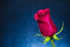 Rose de rouge et fond de bokeh Photographie stock