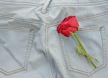 Rose de rouge et jeans, concept d'amour Images libres de droits