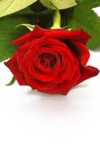 Rose de rouge, fond Photo libre de droits